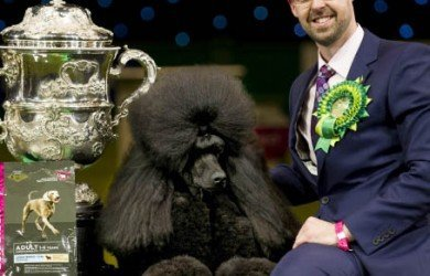 Best in Show Winner Crufts 2015. Comparing Quantitative Research Survey Modes